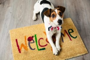 Pet Friendly Apartments in Limerick